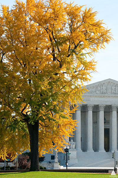 View of the Supreme Court Building from under a gingko tree on the U.S. Capitol's West Front.