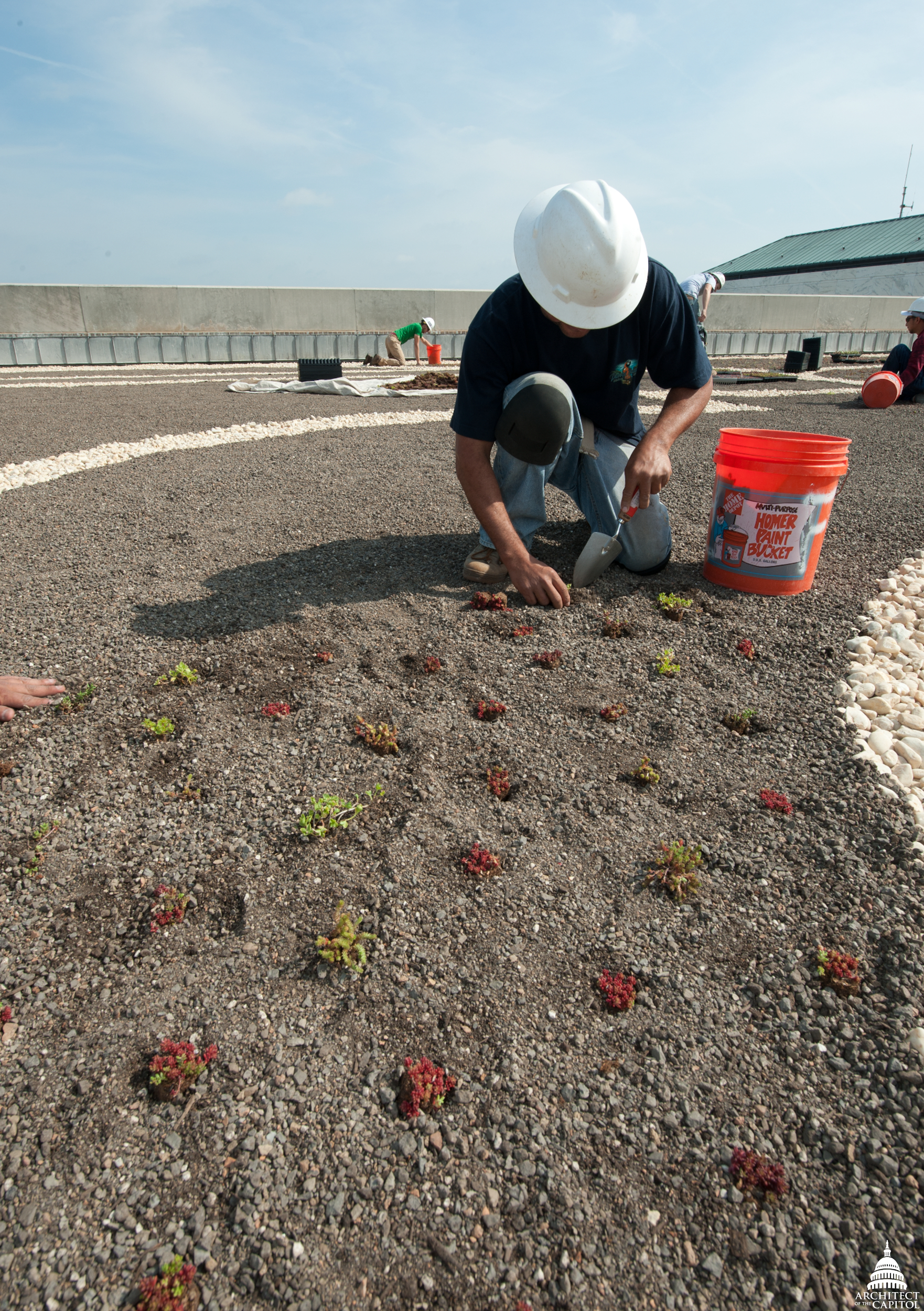 Workers on the Dirksen Building roof plant various types of sedums, a drought-resistant plant that stays green year-round. It has a shallow root system that allows it to grow in only four inches of soil.