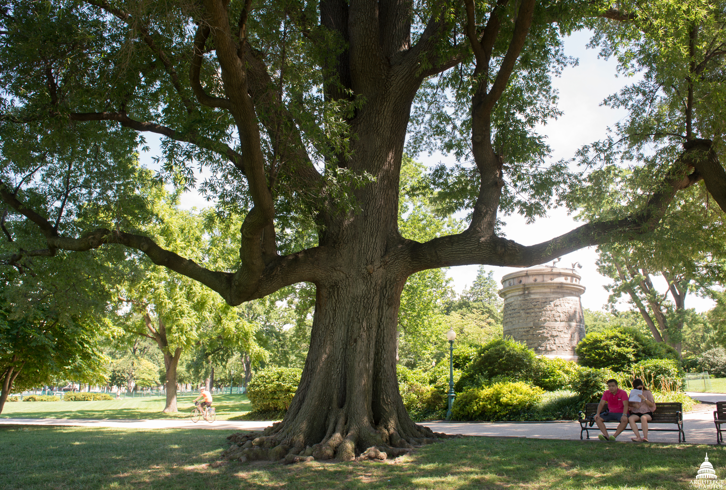Visitors to Capitol Grounds rest beneath a Willow Oak tree.