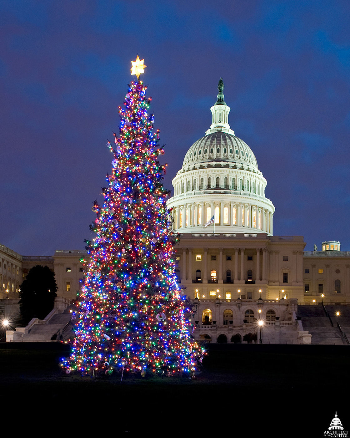 The U.S. Capitol Christmas tree illuminates the West Front.