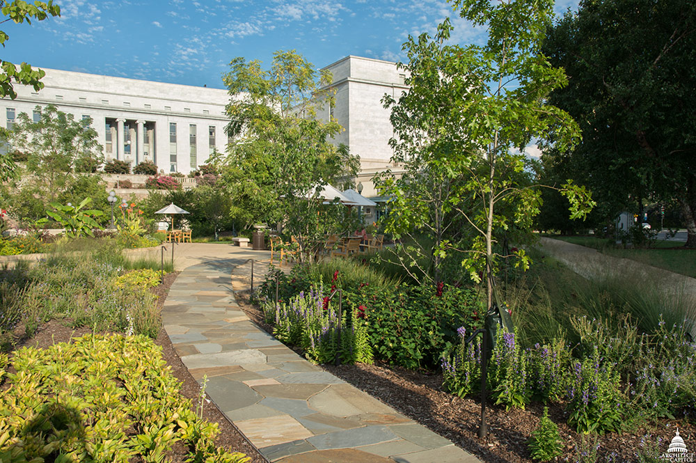 The salvaged flagstone path allows visitors a close view of rain gardens.