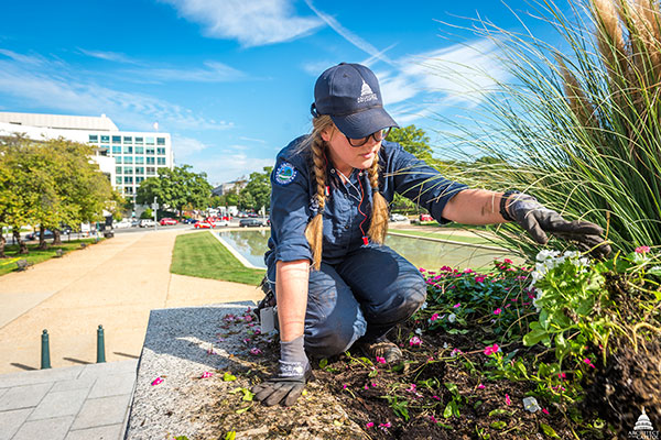 A member of the AOC Capitol Grounds team does some gardening in Senate Park.