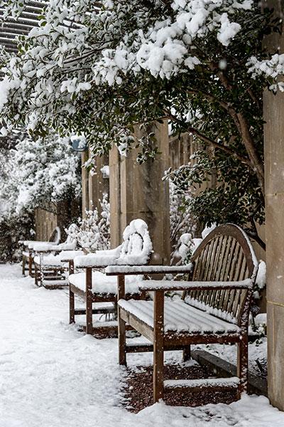 Winter scene from the U.S. Botanic Garden's National Garden.