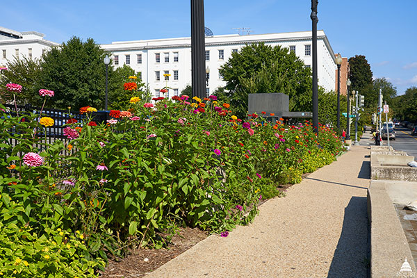 Architect of the Capitol's pollinator garden near Capitol South Metro station.