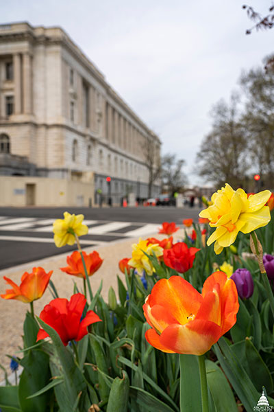 Spring flowers on the U.S. Capitol Grounds.
