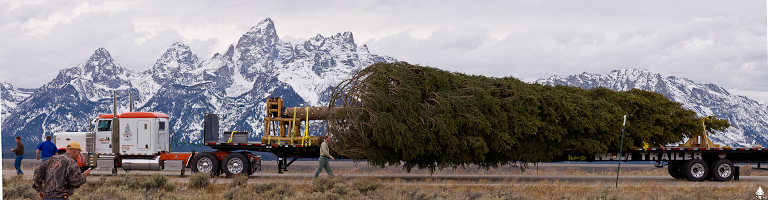 A Holiday Tradition AOC Trims The Tree Architect Of The Capitol  - Plant Christmas Trees