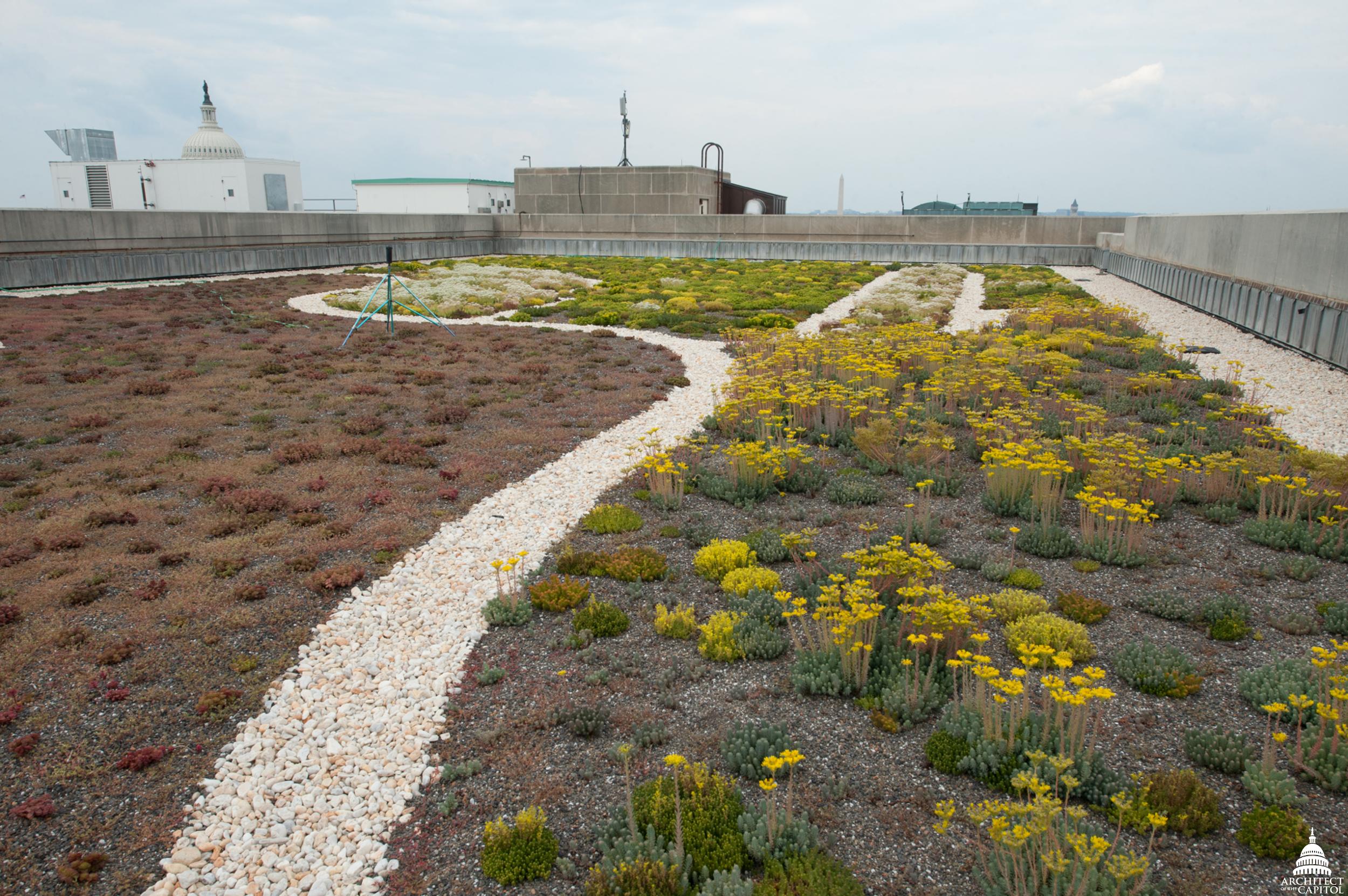 The Dirksen Building green roof thriving.