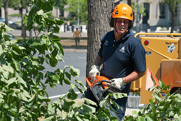 An AOC Capitol Grounds Arborist prunes a tree on Capitol Square.
