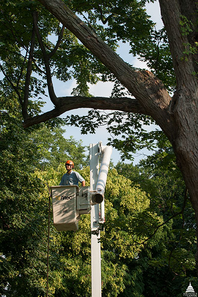 An Architect of the Capitol Arborist among the trees of Capitol Grounds.