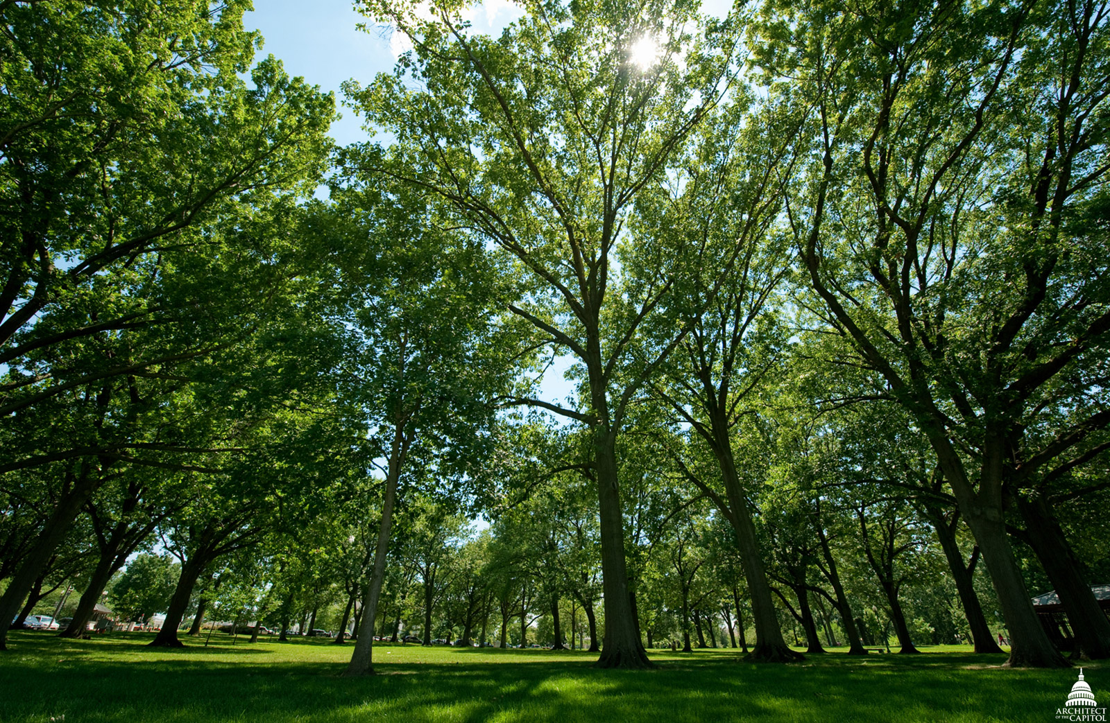 On the 274-acre U.S. Capitol Grounds, there are more than 4,300 trees cared for by the Capitol Grounds team.