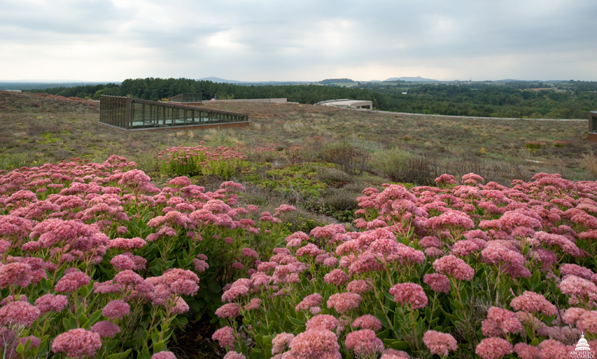 Green Roof at the Packard Campus for Audio Visual Conservation