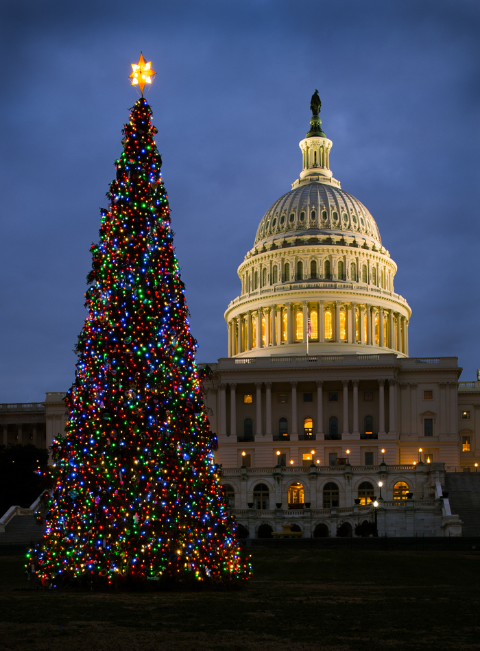 Capitol Christmas Tree Lights Up Washington Architect Of