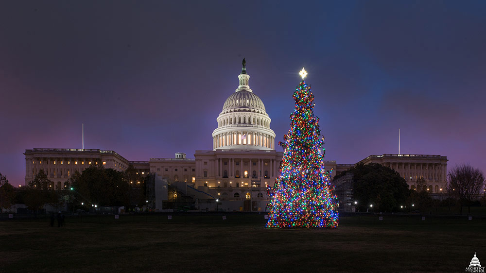 2016 Capitol Christmas Tree with lights on.