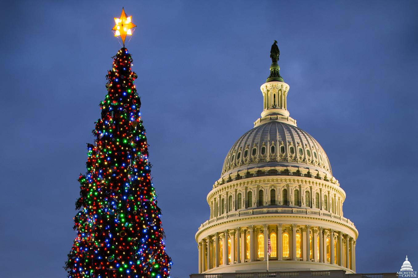 2013 Capitol Christmas Tree