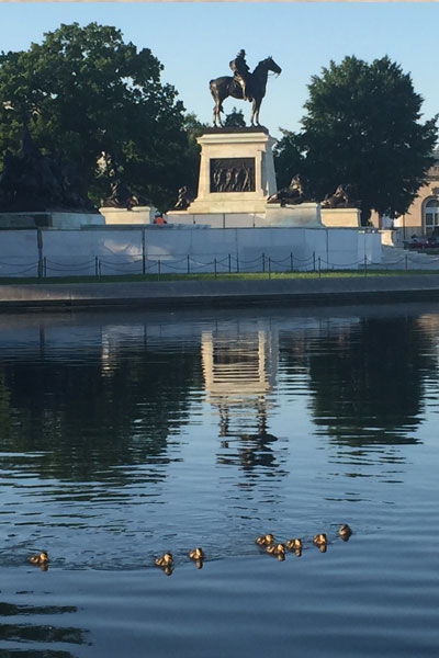 Ducklings swim in the Capitol Reflecting Pool with the Grant Memorial seen in the background.