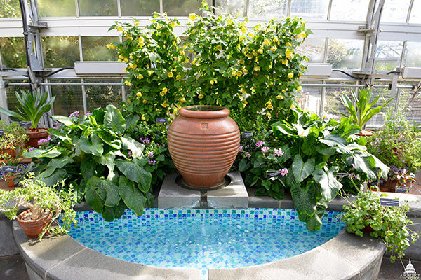 Vessel fountain in the U.S. Botanic Garden's Mediterranean Room.