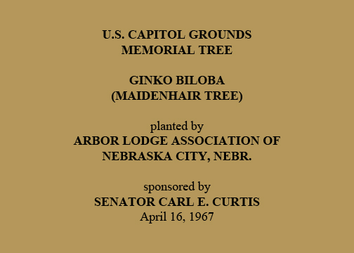 U.S. Capitol Grounds Memorial Tree  Ginko biloba (Maidenhair Tree)  planted by Arbor Lodge Association of Nebraska City, Nebr.  sponsored by Senator Carl E. Curtis April 16, 1967