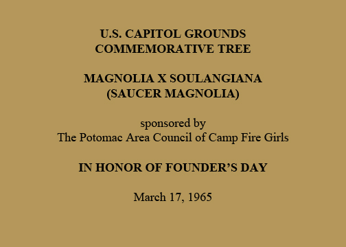 U.S. Capitol Grounds Commemorative Tree  Magnolia x soulangiana (Saucer magnolia)  sponsored by The Potomac Area Council of Camp Fire Girls  In Honor of Founder's Day  March 17, 1965