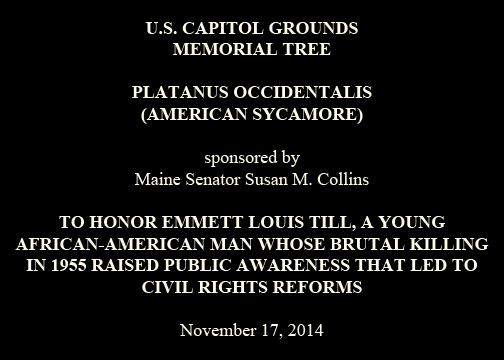 U.S. CAPITOL GROUNDS Memorial Tree  Platanus occidentalis (American Sycamore)  sponsored by Maine Senator Susan M. Collins  To Honor Emmett Louis Till, a Young African-American Man Whose Brutal Killing in 1955 Raised Public Awareness That Led to Civil Rights Reforms  November 17, 2014