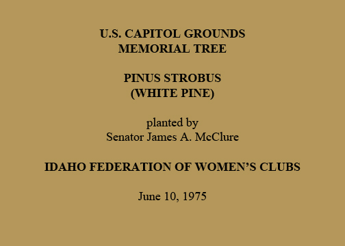 U.S. Capitol Grounds Memorial Tree Pinus strobus (White Pine) planted by Senator James A. McClure Idaho Federation of Women's Clubs June 10, 1975