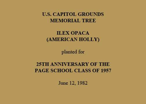 U.S. Capitol Grounds Memorial Tree   Ilex opaca  (American Holly)   planted for   25th Anniversary of the  Page School Class of 1957   June 12, 1982