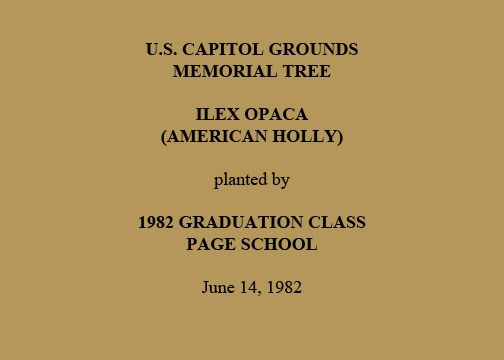 U.S. Capitol Grounds Memorial Tree   Ilex Opaca  (American Holly)   planted by   1982 Graduation Class  Page School   June 14, 1982