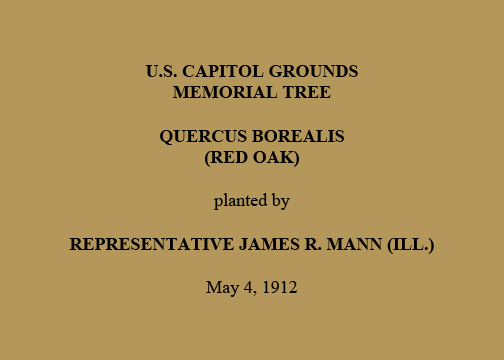 U.S. Capitol Grounds Memorial Tree  Quercus borealis (Red Oak)  planted by  Representative James R. Mann (Ill.)  May 4, 1912