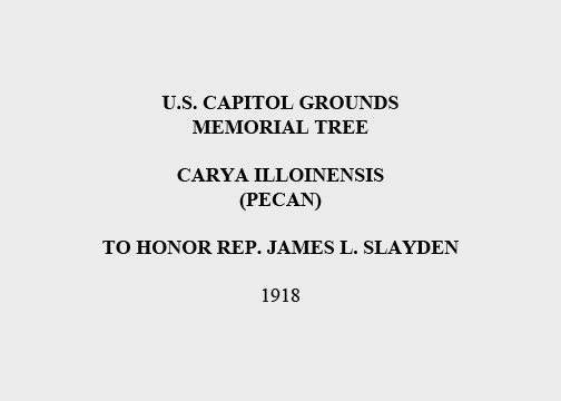 U.S. Capitol Grounds Memorial Tree  Carya illoinensis (Pecan)  To Honor Rep. James L. Slayden  1918