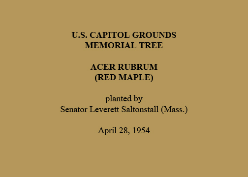 U.S. Capitol Grounds  Memorial Tree   Acer rubrum  (Red Maple)   planted by  Senator Leverett Saltonstall (Mass.)   April 28, 1954