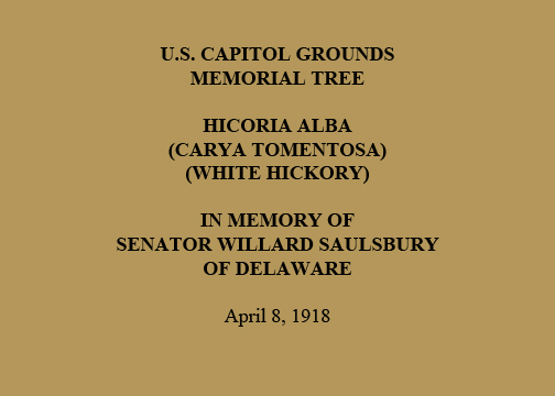 U.S. Capitol Grounds  Memorial Tree   Hicoria alba  (Carya Tomentosa)  (White Hickory)   In Memory of  Senator Willard Saulsbury  of Delaware   April 8, 1918