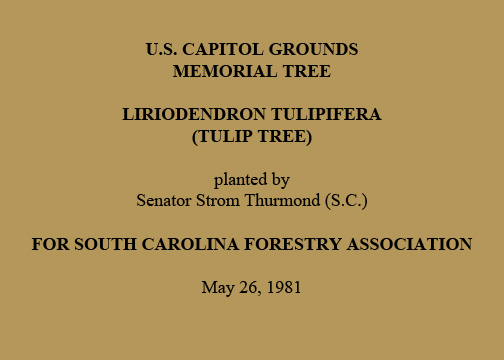 U.S. Capitol Grounds  Memorial Tree   Liriodendron tulipifera  (Tulip Tree)   planted by  Senator Strom Thurmond (S.C.)   For South Carolina Forestry Association   May 26, 1981