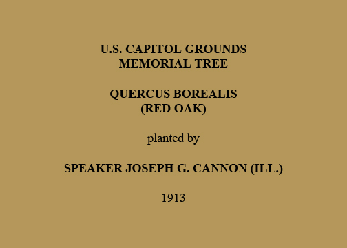 U.S. Capitol Grounds Memorial Tree  Quercus borealis (Red Oak)  planted by  Speaker Joseph G. Cannon (Ill.)  1913