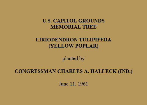 U.S. Capitol Grounds Memorial Tree  Liriodendron tulipifera (Yellow poplar)  planted by  Congressman Charles A. Halleck (Ind.)  June 11, 1961