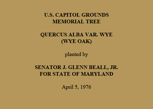 U.S. Capitol Grounds  Memorial Tree    Quercus alba var. wye  (Wye Oak)   planted by   Senator J. Glenn Beall, Jr.  For State of Maryland   April 5, 1976