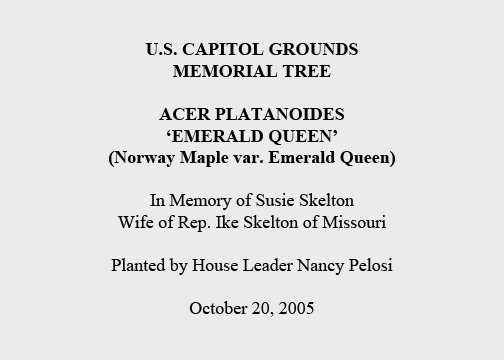 U.S. Capitol Grounds Memorial Tree  Acer platanoides 'emerald queen' (Norway Maple var. Emerald Queen)  In Memory of Susie Skelton Wife of Rep. Ike Skelton of Missouri  Planted by House Leader Nancy Pelosi  October 20, 2005