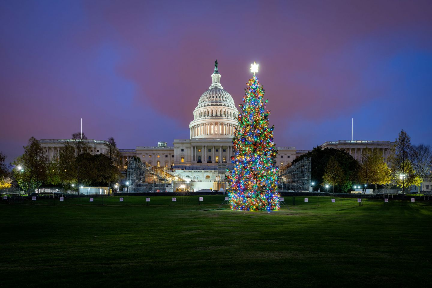 The 2020 U.S. Capitol Christmas Tree from the Grand Mesa, Uncompahgre and Gunnison (GMUG) National Forests in Colorado.