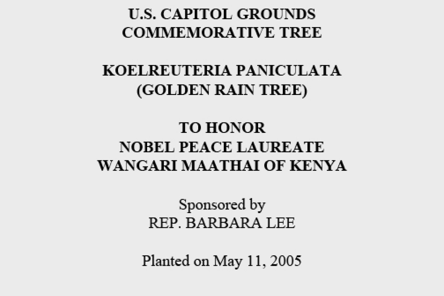 U.S. Capitol Grounds Commemorative Tree  Koelreuteria paniculata (Golden Rain Tree)  To Honor Nobel Peace Laureate Wangari Maathai of Kenya  Sponsored by REP. BARBARA LEE  Planted on May 11, 2005