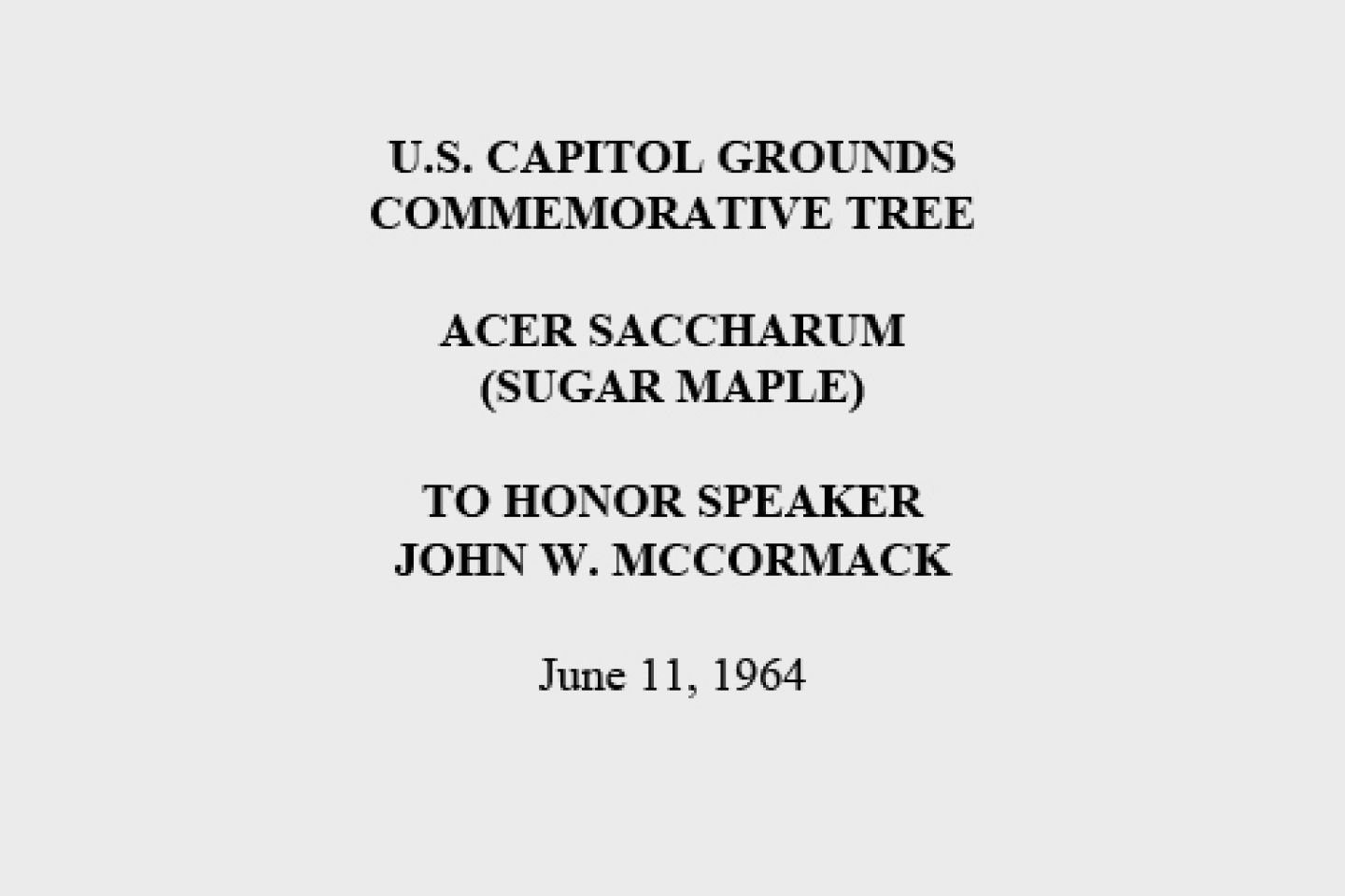 U.S. Capitol Grounds Commemorative Tree  Acer saccharum (Sugar Maple)  To Honor Speaker John W. McCormack  June 11, 1964
