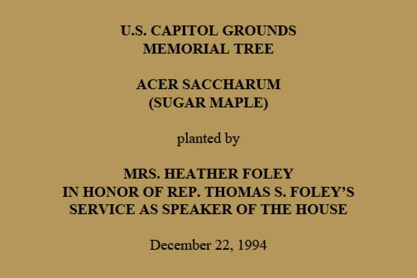 U.S. Capitol Grounds Memorial Tree  Acer saccharum (Sugar Maple)  planted by  Mrs. Heather Foley In Honor of Rep. Thomas S. Foley's Service as Speaker of the House  December 22, 1994