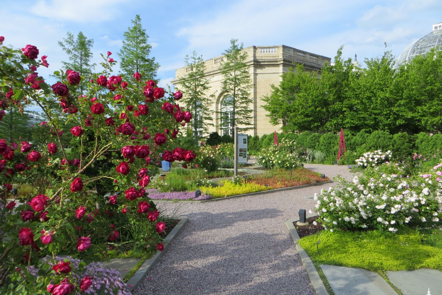 The Rose Garden with the Botanic Garden Conservatory in the background.