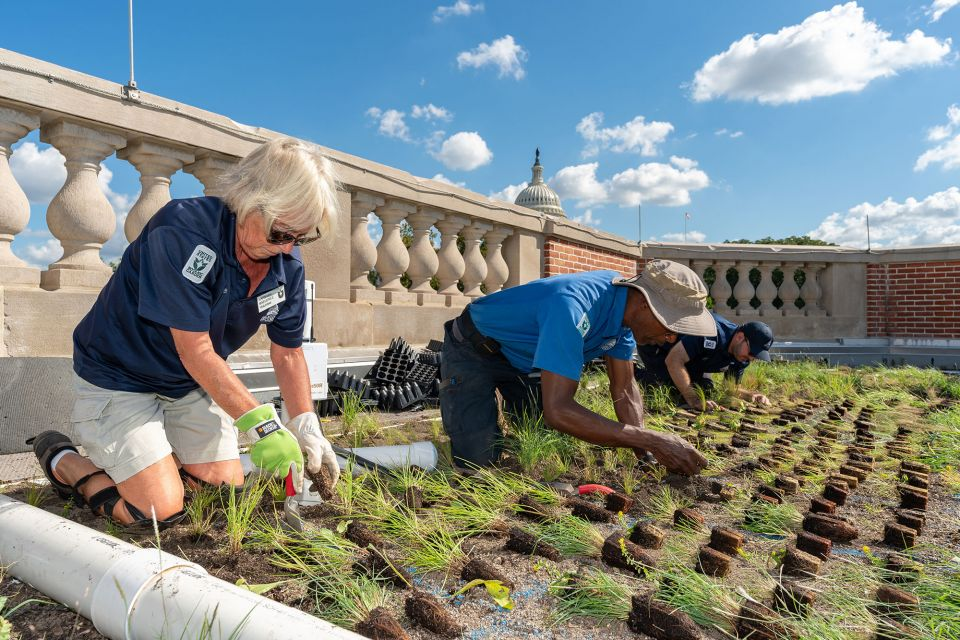 AOC employees plant the new green roof at the U.S. Botanic Garden - October 2019.