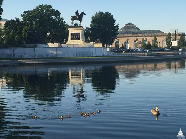 Ducklings on the water of the Capitol Reflecting Pool with the Grant Memorial seen in the background.