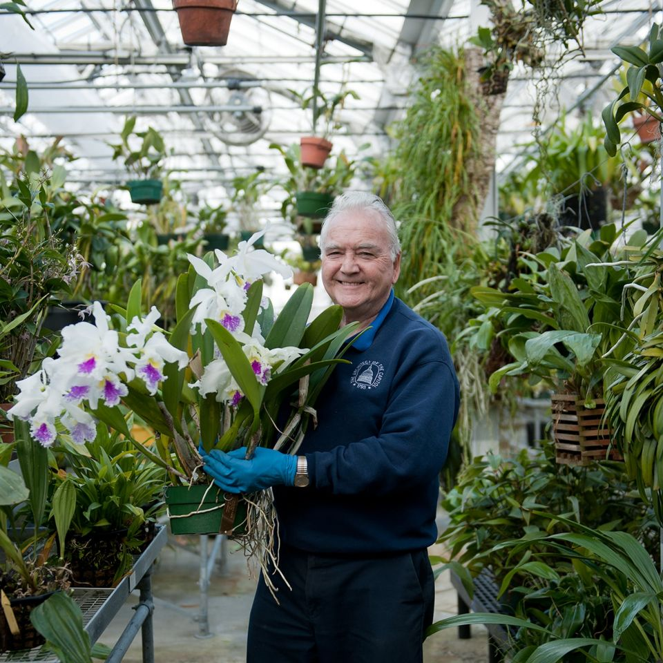Gardener holding flowers in greenhouse