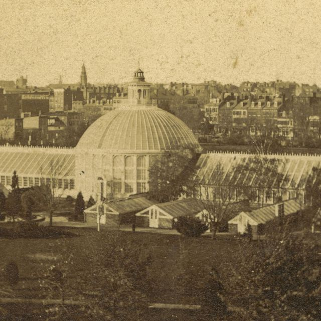 This 1873 photograph shows how the USBG's first Conservatory had grown from a single Victorian greenhouse to this large, five-part Conservatory with 14 support greenhouses.