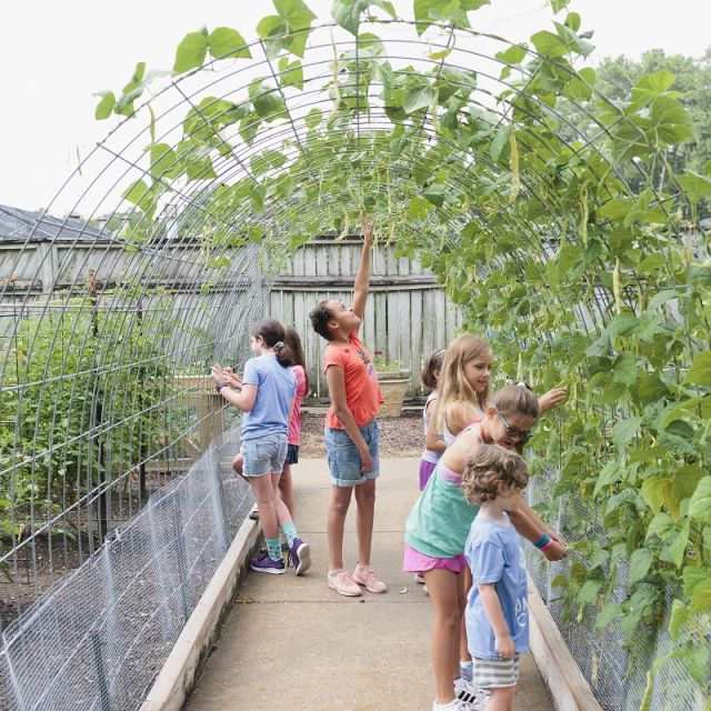 Children pick beans in the Bruno Vegetable Garden at Birmingham Botanical Gardens in Alabama.