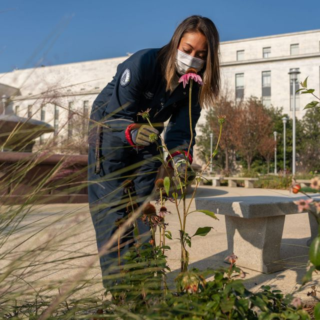 A member of the Capitol Grounds and Arboretum team at work in the park above the House office buildings garage.