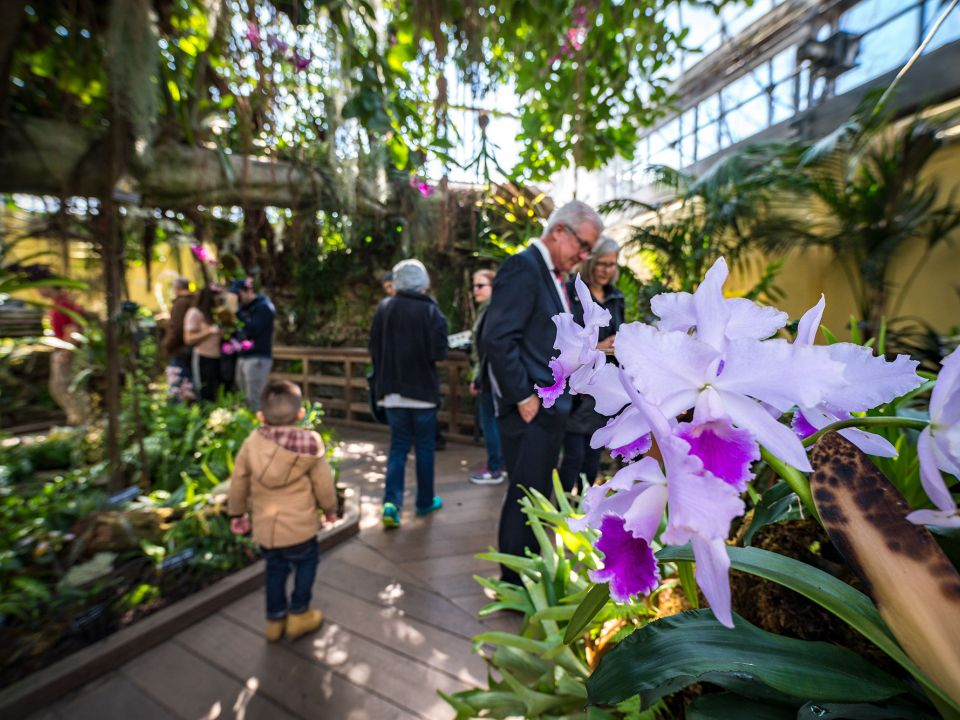 Visitors explore the USBG Orchid house.