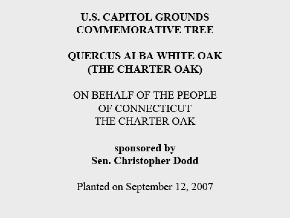 U.S. Capitol Grounds Commemorative Tree  Quercus alba white oak (The Charter Oak)  On Behalf of the People of Connecticut The Charter Oak  sponsored by Sen. Christopher Dodd  Planted on September 12, 2007