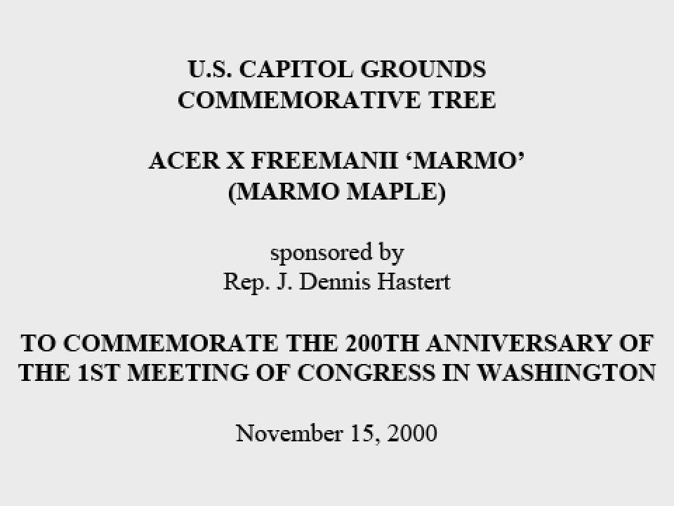 U.S. Capitol Grounds Commemorative Tree  Acer x freemanii 'marmo' (Marmo Maple)  sponsored by Rep. J. Dennis Hastert  To Commemorate the 200th Anniversary of the 1st Meeting of Congress in Washington  November 15, 2000
