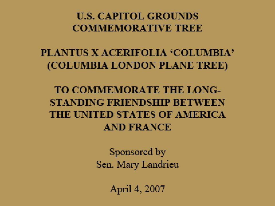 U.S. Capitol Grounds Commemorative Tree  Plantus x acerifolia 'columbia' (Columbia London Plane Tree)  To Commemorate the Long- standing Friendship Between the United States of America and France  Sponsored by Sen. Mary Landrieu  April 4, 2007